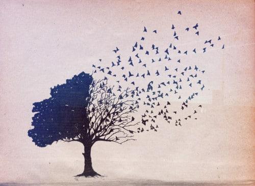 boomvogels